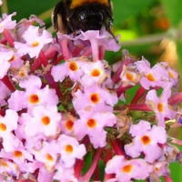 Making Ends Meet Tudor Style - Beekeeping & Candlemaking