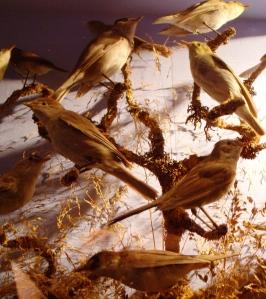 13. Bird exhibit