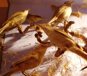 14. Bird exhibit